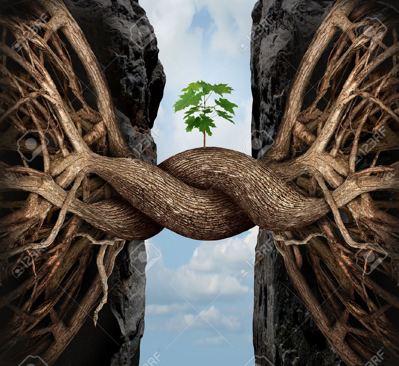 Paulowniaangola-unity-growth-concept-and-bridge-the-gap-business-symbol-as-two-tree-roots-on-a-high-steep-cliff-conn